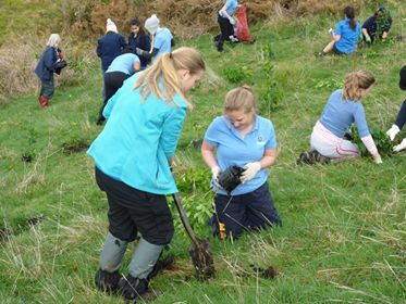 Two friends planting a tree