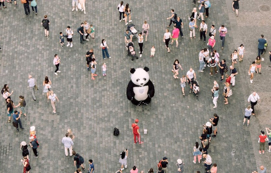 Panda standing out in crowd
